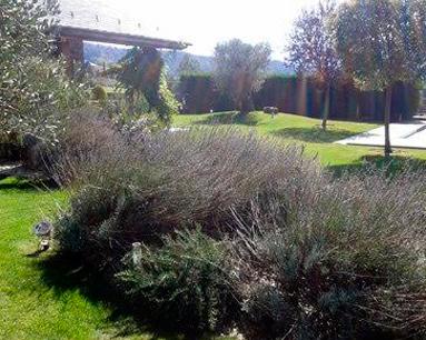 Proyectos de Jardineria Damac